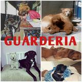 Guardería Canina Traslados Peluquería Adiestramientos Paseos