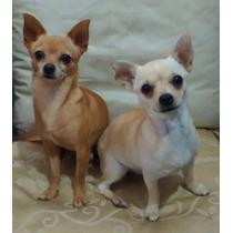 Cachorros Chiguhaguha