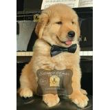 Cachorros Golden Selecc. Criadero Estancia Del Mar - Envios