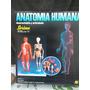 El Cuerpo Humano Anatomia Piel Huesos Esqueleto Organos