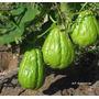 3 Papas De Aire +semillas Calabaza Porongo, Esponja ,caigua