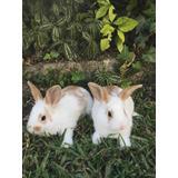 Conejos Criollos Muy Lindos Colores!
