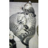 Gatitos Hermanos En Adopción Responsable