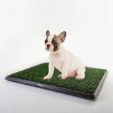 Alfombra Bandeja Sanitaria De Pasto Para Perros Gatos Mascotas