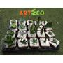 Cactus Y Suculentas Para Souvenir