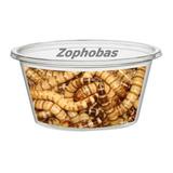 Zophobas X 100 U Alimento Vivo Para Reptiles Y Peces