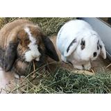 Heno De Pastura 1 Kg. Ideal Para Conejos Y Cobayos