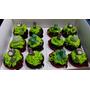 Cupcakes Personalizados Rellenos X Docena - Pedidos Express!
