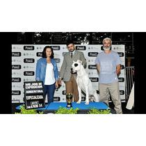 Cachorros De Dogo Argentino Fca.