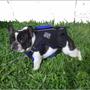 Salvavidas Para Perros Y Gatos Neoprene Keikeineoprene