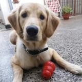 Pensionado Canino Floresta Tarjeta Cuotas