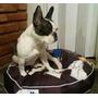 Cuna Para Perros De Diseno, Antidesgarro, Lavable, Desmontab