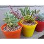 Cactus Y Suculentas En Maceta N°8