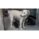 Donación Tapitas Para Todos $ 300/ + Castraciones - Abandono