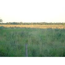 Campo En Chaco Exelente Ubicacion Sobre La Ruta Suelo Fertil