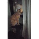 Gato Adopción De  Dos Años