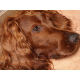 Pensionado Guarderia Y Paseo Canino Y Adiestramiento Canino