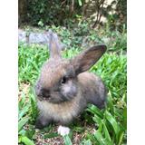 Conejos Criollos Varios Colores