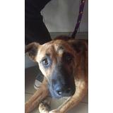 Donación Perro Operación Pata