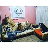 Pensionado, Guardería Canina Miperroamor