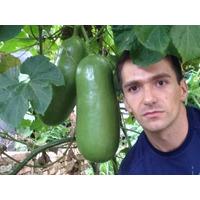 Sicana(semillas)casabanana,frutales Exoticos Tropicales Medi