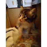 Hermosos Gatitos En Adopcion Responsable