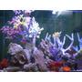 Corales Artificiales Para Acuario Marino