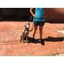 Correa Cinturón Manos Libres Para Mascota/ Perro