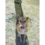 Correa Manos Libres Extensible Perro Mascota