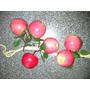 Frutas Decoracion Centro De Mesa Riestra X 6 Manzanas Rojas