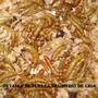 Tenebrios X 50 - Ideal Para Geckos, Pogonas, Erizos Y Aves