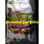 Alimento Balanceado Natural Meat Adulto X 15 Super Premium