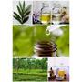 Tea Tree Oil O Aceite Del Arbol De Té Aromaterapia