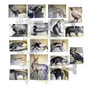 Blancos Arqueria Set Completo Figuras Animales 2d