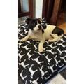 Almohadón Colchón Para Perros Gatos Lavable Base Impermeable