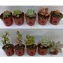 Lote De 10 Cactus Y Crasas - Souvenires