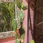 Cactus Opuntia Tipo Tuna , Con Flor Naranja ! En Maceta N 21