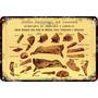 Carteles Antiguos Chapa 60x40cm Cortes De Carne Reses Al-163