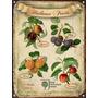 Chapa Vintage Hothouse Fruits Frutas De Invernadero M331
