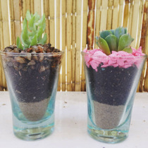 Souvenirs Macetas Suculentas/cactus Cumple Boda Kit Siembra