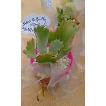 Suculentas Y Cactus Souvenirs Económicos