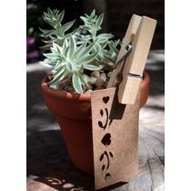 Suvenir Suculentas Cactus Casamientos Bodas Comunion Empresa