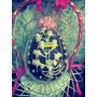 Huevo De Pascua $400. 3kilos!! !rifas