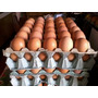 Huevos De Campo 6 Maples De Huevos De Gallinas En Libertad