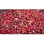 Pimienta Rosa De 1 Ra X 1 Kg Origen Brasil Recien Llegada