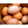 Huevos Caseros Del Campo A Su Casa