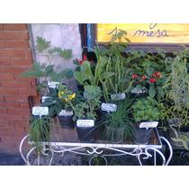 Mayorista Plantas Aromaticas Huerta Organicas Maceta Envios