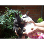 Conejitos Bebes De 30 Días En La Plata