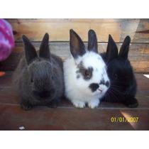 Conejos Hermosos En La Plata