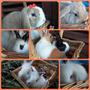 Conejos Orejas Caídas Ojos Celestes, Leon Lop,dutch Y Otras